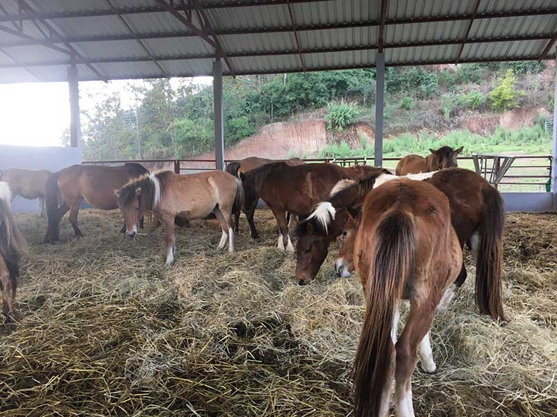 Horse-breed-